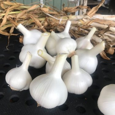 Corndale Grove Garlic, Quirky Cooking Store